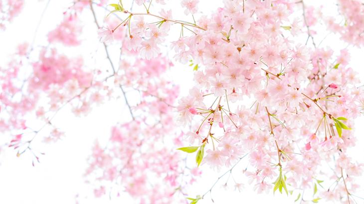 春 です ね もうすぐ